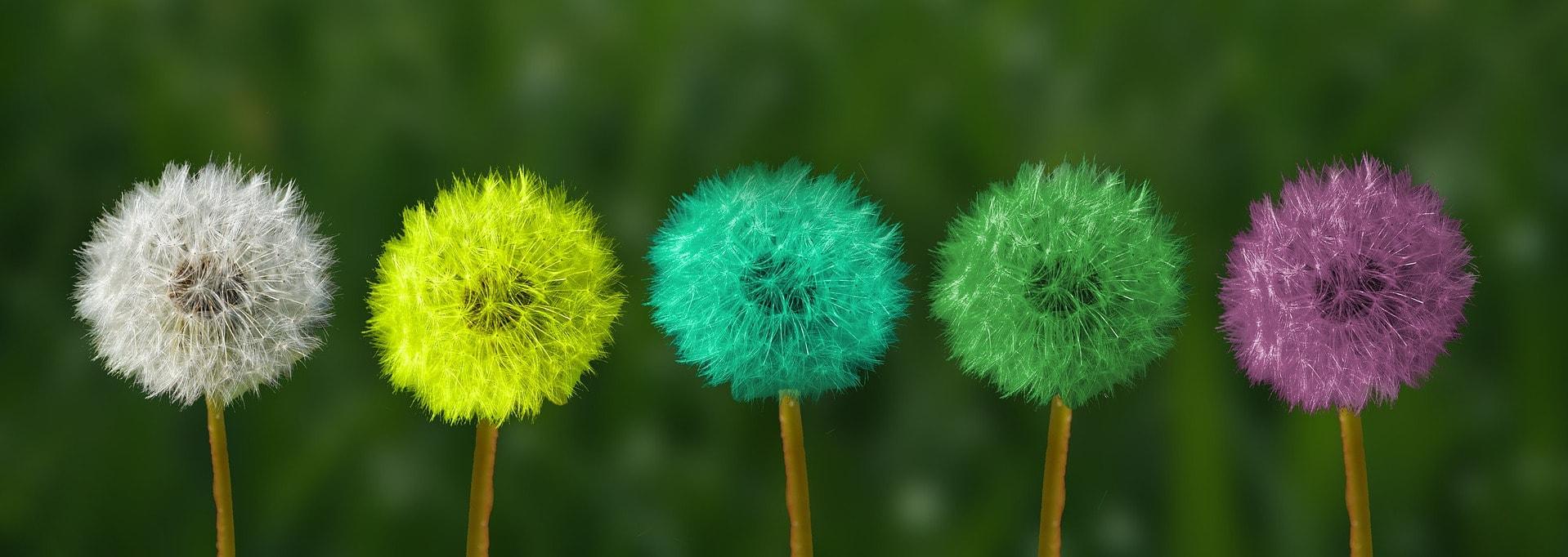 5 fleurs de pollen avec 5 couleurs différentes