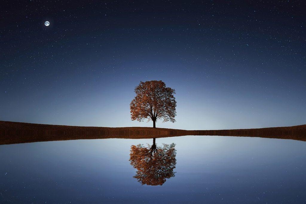 arbre qui se reflète dans un lac